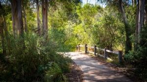 Diamond Creek Trail 4