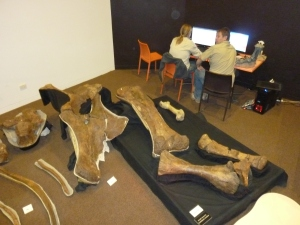 Selection of Matilda's bones with scientists at work in the background - Age of Dinosaurs.
