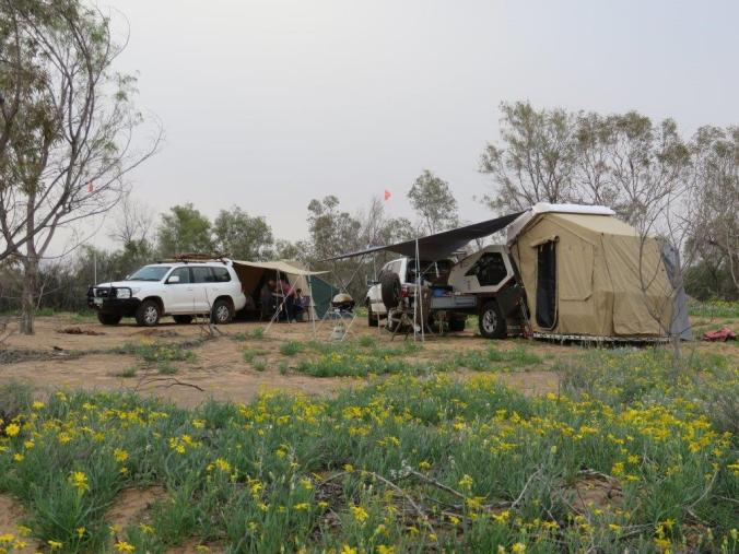 Another camp with magnificent wildflowers everywhere over the crossing. Now a green desert.