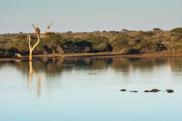 088 Kruger - Waterhole with zebras and hippos