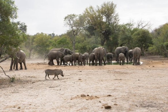 140 Kruger - Elephants at waterhole
