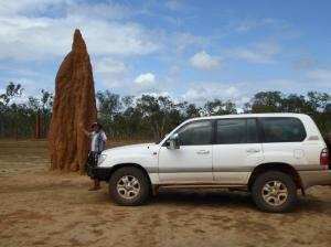These termites in FNQ are dammed good workers!
